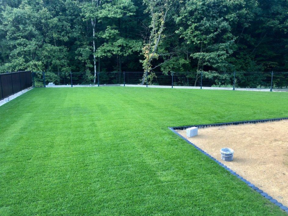 trawnik z rolki 1