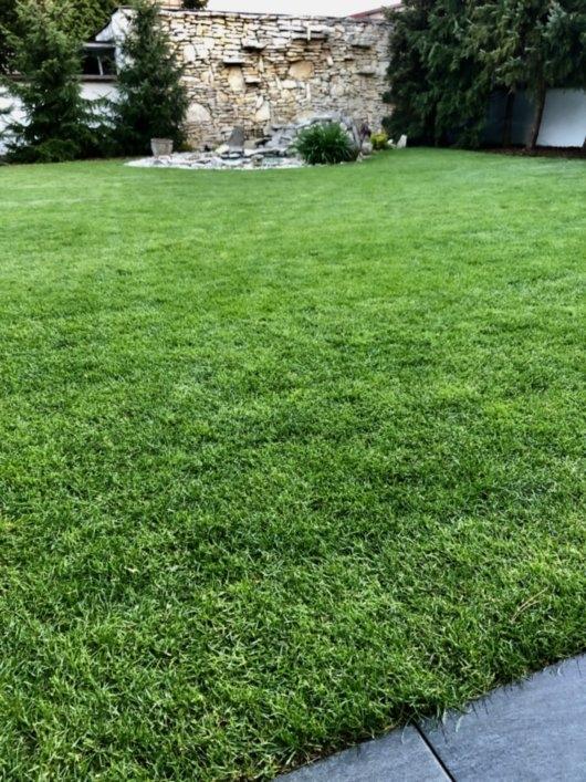 trawnik z rolki 10