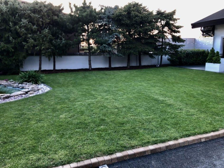 trawnik z rolki 11