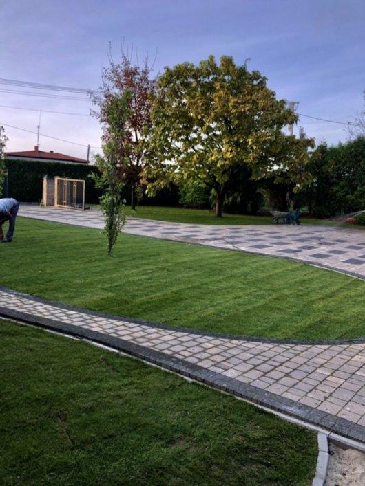 trawnik z rolki 12
