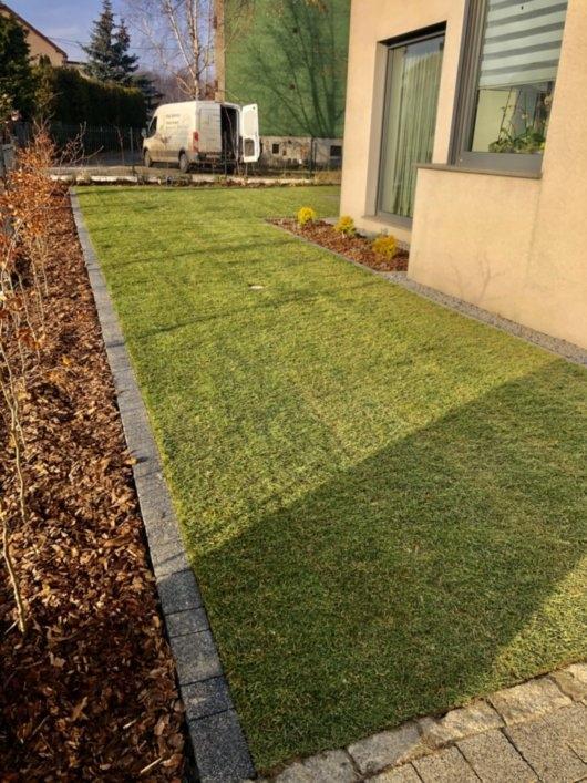 trawnik z rolki 13