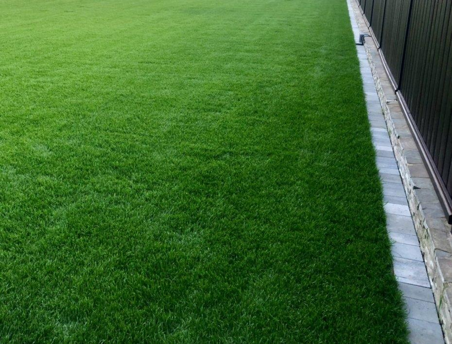 trawnik z rolki 2