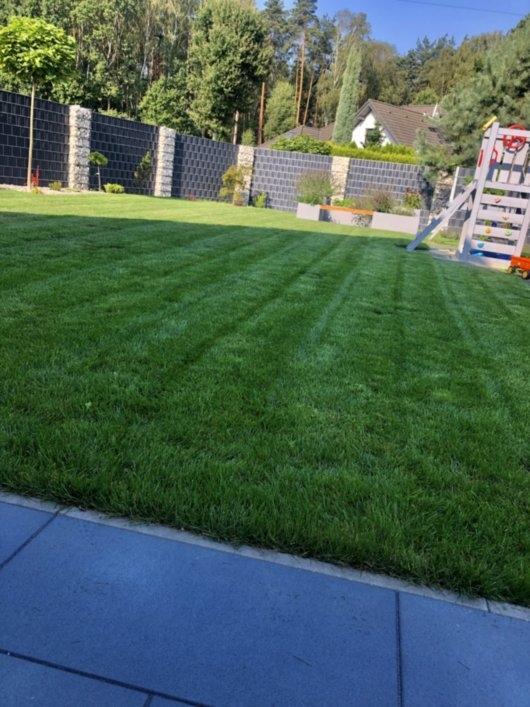 trawnik z rolki 7