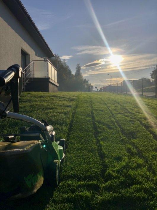 trawnik z rolki 8
