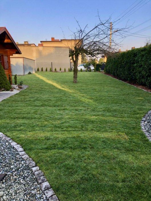 trawnik z rolki 9