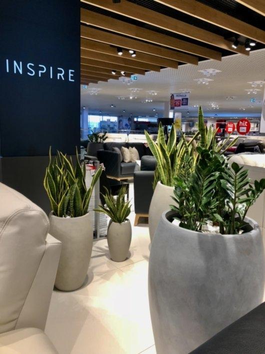 rośliny dla twojego biura 2