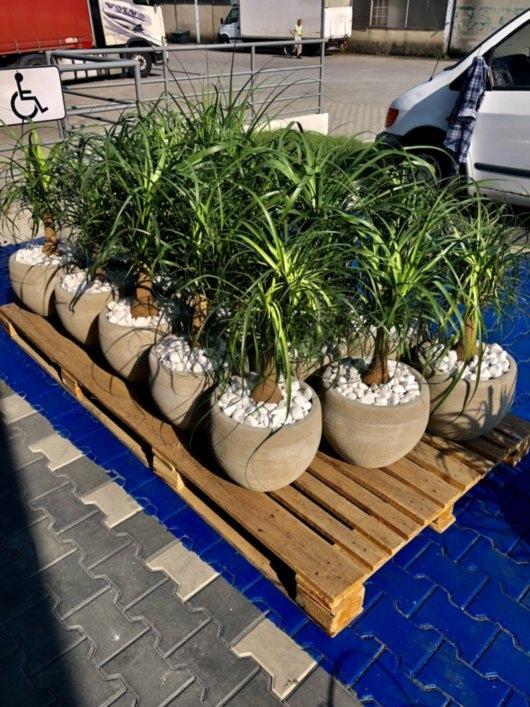rośliny dla twojego biura 4