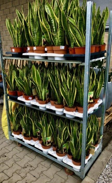 rośliny dla twojego biura 5