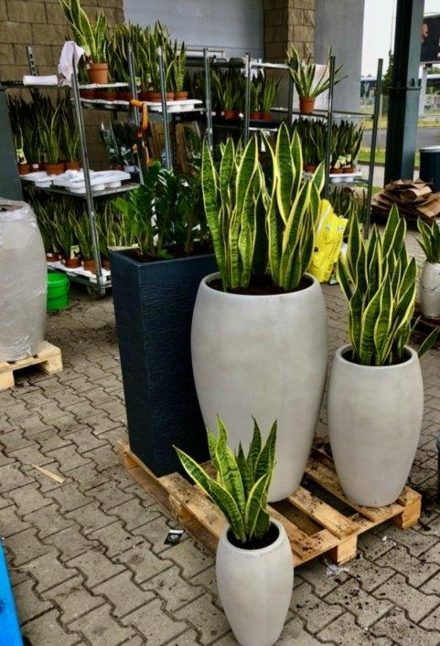 rośliny dla twojego biura 6