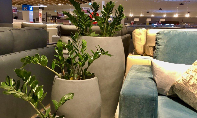 rośliny dla twojego biura 7