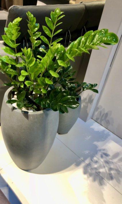 rośliny dla twojego biura 8