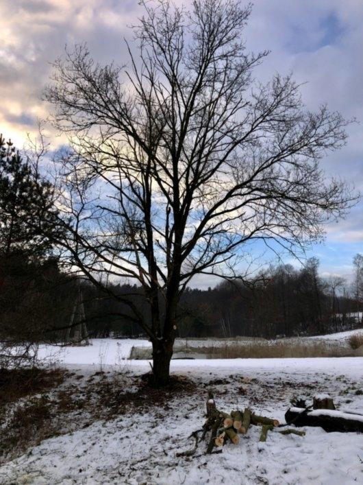 wycinka drzew 10