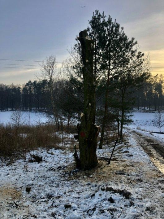 wycinka drzew 11