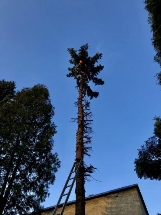 wycinka drzew 3