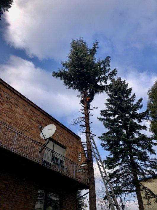 wycinka drzew 4