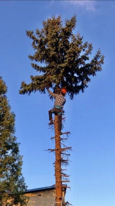 wycinka drzew 5