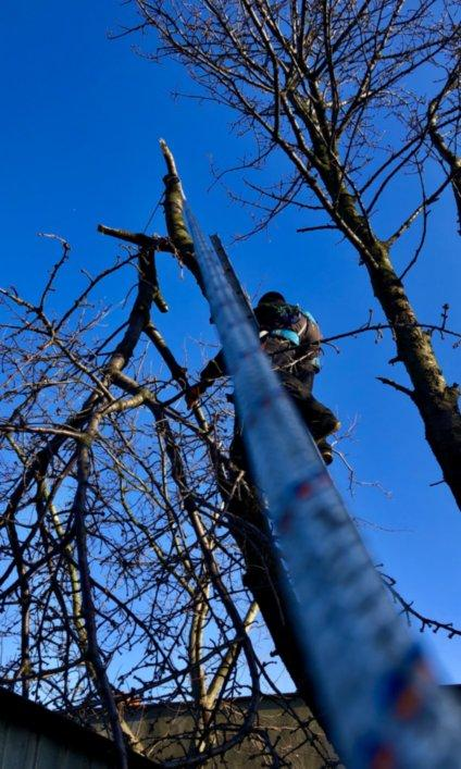 wycinka drzew 6